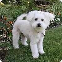 Adopt A Pet :: ROXY - Newport Beach, CA