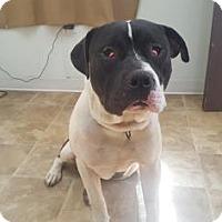 Adopt A Pet :: Edison - Chico, CA