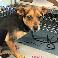 Jack Russell Terrier Mix Dog for adoption in Willows, California - Morgan