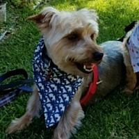 Adopt A Pet :: Finch - Los Angeles, CA