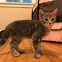 Adopt A Pet :: August - Lexington, KY