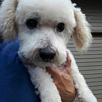 Adopt A Pet :: Stanley - Salem, OR