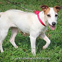 Adopt A Pet :: Megan - Conyers, GA