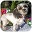Photo 1 - Shih Tzu Dog for adoption in Los Angeles, California - SOOKI