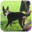 Photo 4 - German Shepherd Dog Mix Puppy for adoption in Cleveland, Ohio - Louie