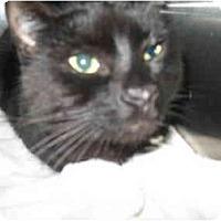 Adopt A Pet :: L'il One - Mission, BC