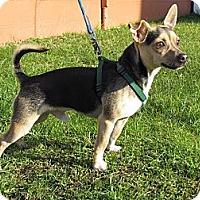 Adopt A Pet :: Max - Hastings, NY