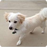 Adopt A Pet :: Poncho - Oceanside, CA