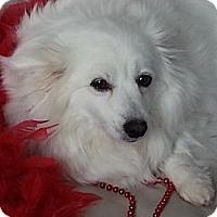 Adopt A Pet :: Snookie - Saskatoon, SK