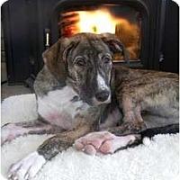 Adopt A Pet :: Annabelle - Rigaud, QC