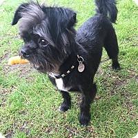 Adopt A Pet :: Tucker - Playa Del Rey, CA