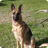 Adopt A Pet :: HAPPY - SAN ANTONIO, TX