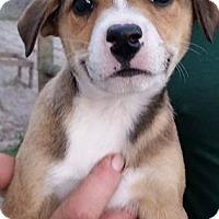Adopt A Pet :: Bayou - Gainesville, FL