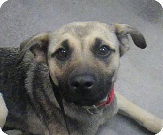 Shepherd (Unknown Type) Mix Dog for adoption in Lloydminster, Alberta - Londyn