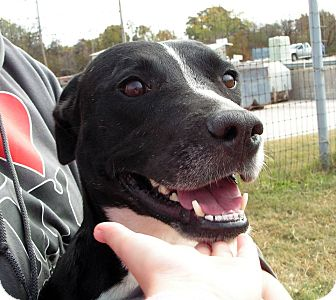 Labrador Retriever Mix Dog for adoption in Joshua, Texas - Trixie