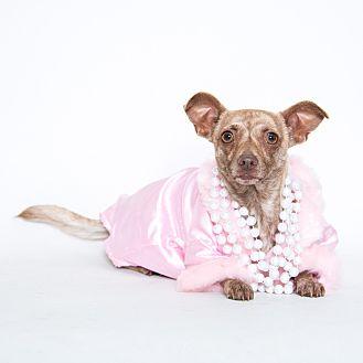 Chihuahua Mix Dog for adoption in Stockton, California - Lola
