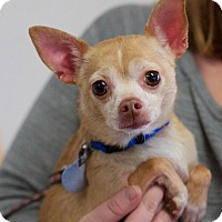 Adopt A Pet :: Tamara - Marietta, GA