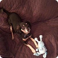 Adopt A Pet :: Amos - Canton, OH