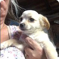 Adopt A Pet :: Payton - Thousand Oaks, CA