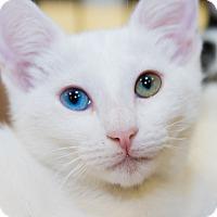 Adopt A Pet :: Daisy - Irvine, CA