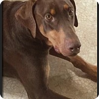 Adopt A Pet :: Titan - Columbus, OH