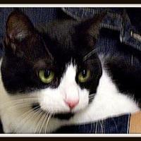 Adopt A Pet :: Allie - Spring Brook, NY