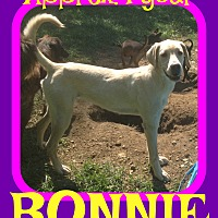 Adopt A Pet :: BONNIE - New Brunswick, NJ