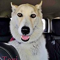 Adopt A Pet :: Teri - Carrollton, TX
