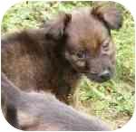 Terrier (Unknown Type, Medium)/Labrador Retriever Mix Puppy for adoption in Sparta, New Jersey - Disney Girls