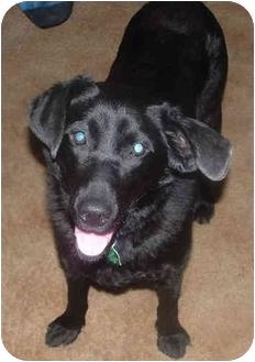 Labrador Retriever Mix Dog for adoption in Owatonna, Minnesota - Rosebud