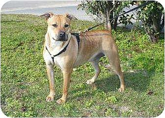 Labrador Retriever Mix Dog for adoption in Graceville, Florida - Auburn I