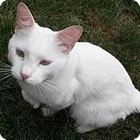 Adopt A Pet :: Casper - Deer Park, NY