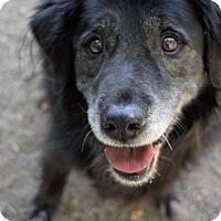 Adopt A Pet :: Jax - West Richland, WA
