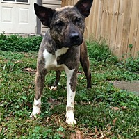 Adopt A Pet :: Swiper - Baton Rouge, LA