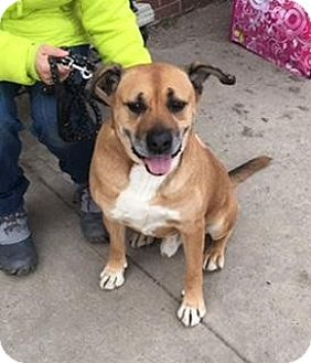 Shepherd (Unknown Type) Mix Dog for adoption in Berea, Ohio - Gambit - CLASS certified