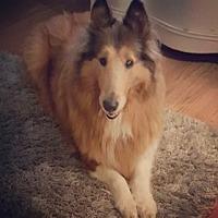 Adopt A Pet :: Lenka - Powell, OH