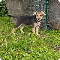 Adopt A Pet :: Marshmallow - New Oxford, PA