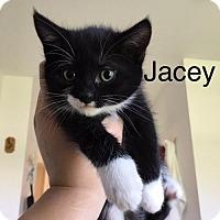 Adopt A Pet :: Jacey - Naugatuck, CT