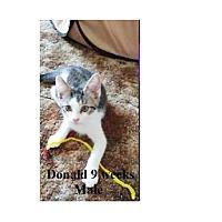 Adopt A Pet :: DONALD - Northfield, OH