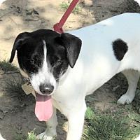 Adopt A Pet :: Luna - Aurora, IL