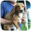 Photo 2 - Hound (Unknown Type) Mix Dog for adoption in Metamora, Indiana - Nike