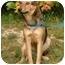 Photo 3 - Shepherd (Unknown Type)/Terrier (Unknown Type, Medium) Mix Dog for adoption in Millstone, New Jersey - Shep