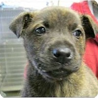 Adopt A Pet :: Yogi - Alexandria, VA