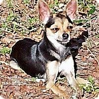 Adopt A Pet :: IZZY - AUSTIN, TX