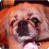 Adopt A Pet :: Humphrey - Mays Landing, NJ