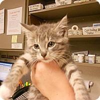 Adopt A Pet :: Candice - Maywood, NJ