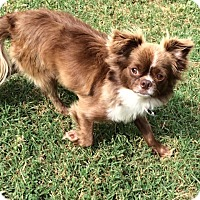 Adopt A Pet :: Woody - Edmond, OK
