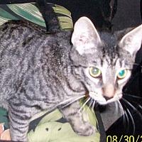 Adopt A Pet :: DUGGER - Morriston, FL
