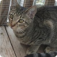 Adopt A Pet :: Paw Revere LC - Schertz, TX
