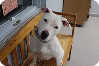 Mixed Breed (Large) Mix Dog for adoption in Manitowoc, Wisconsin - Karma
